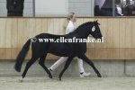 210215244 Jowout's Blacky (Haywards Guardsman x Heuvingshof Wout)-005.JPG